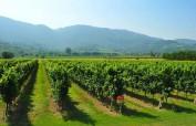 """Colli Berici – das verborgene Qualitätsweinbaugebiet im Veneto, quasi der """"Kaiserstuhl der Poebene"""""""