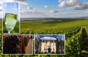 Die Weite der Champagne mit ihren Reben beim Reims, Rüttelpulte sowie ein Schnappschuss von der Avenue de Champagne in Epernay