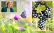 Julia Klöckner zeichnet die besten Regent-Weinerzeuer aus - die Gewinner: Weingut Bärenhof, Winzerverein Hagnau, Weingut Wylandblick/Schweiz. Oben links die Bundesministerin Julia Klöckner, rechts eine Regent-Traube