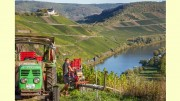 Mosel: Wein-Ernte 2020 sowie Marktlage - zufriedene Moselwinzer mit dem Jahrgang 2020