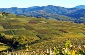 Auch wenn das große Gebiet Baden sehr heterogen ist, säumen doch viele Weinberge den Schwarzwald wie hier im Markgräflerland