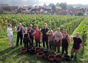 Lesemannschaft der Staatlichen Weinbaudomäne Oppenheim. Foto: Stefan F. Sämmer, www.samphoto.de