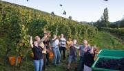Weingut Maximilian Bohnert sehr zukunftsorientiert: will in fünf Jahren alles auf PIWI-Sorten umgestellt haben. Feiern hier das Ende der Weinlese