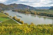 Weinberge an der Donau in der Wachau – Österreich ist in den USA zum besten Weinreise-Ziel Europas gekürt worden.