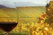 Das Weinland Baden