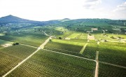 Weingut Jammertal in Ungarn