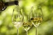 Weißweinabsatz wächst – fast gleichauf mit Rotwein