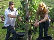 Frankreich: Kleinste Weinernte seit 40 Jahren