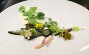 Forelle in der novo-regionalen Küche: Robert Rädel