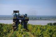 Gutes Wetter während der Blütezeit und der Lese lassen die Winzer im Bordeaux einen sehr guten Jahrgang erwarten.