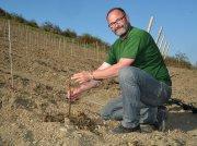 Thomas Zenz, Betriebsleiter des Weinguts Klostermühle Odernheim, pflanzt Pinot-Noir-Reben aus dem Burgund im Langenberg an der Nahe.