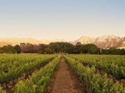 Weinbau in Paarl, der Region in Südafrika, wo die besten Weine wachsen.