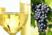 White wine from black grapes?