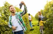 Deutsche Winzer mit der Ernte 2018 hochzufrieden: gut und viel!