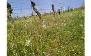 Biodiversität im Weinbau: Neue Maßnahmen und Forschung - Projekt AMBITO: Entwicklung und Anwendung eines modularen Biodiversitäts-Toolkits für den Weinbau in Deutschland