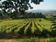 Vinho-Verde-Weine – frisches Grün im Glas