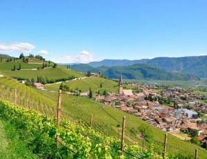 Blick auf Tramin - Heimat des Weinguts Wilhelm Walch