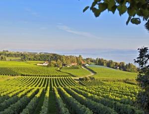 Weingut Robert und Manfred Aufricht am Bodensee