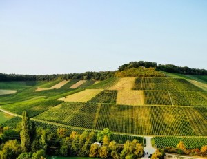 Weinkonvent Dürrenzimmern - bemerkenswert schöne Rotweine aus dem württembergischen Keuperland. Im Bild die Lage Dürrenzimmerner Mönchsberg