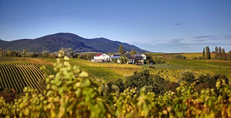 Weingut Erlenwein in der Südpfalz aufstrebendes Weingut in idyllischer Lage zwischen Ilbesheim und Leinsweiler