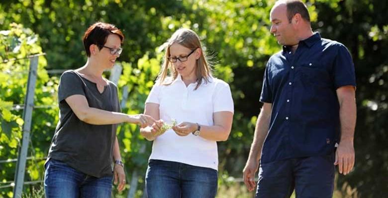 Weingut Knöll und Vogel (von links): Sandra Vogel, Nicole Vogel und ihr Ehemann Stefan Trutter. Foto: Melanie Hubach