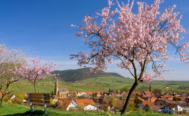 Blick auf Birkweiler mit Mandelblüte. Foto: Südliche Weinstraße, Stefanie Pappon