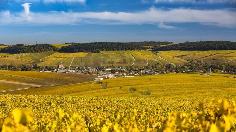 Chablis – die großartigen Chardonnay, eine Perle des Burgund. Blick auf den Ort mit den Crand Cru Lagen darüber. Foto: Sébastien Boulard - Adobestock