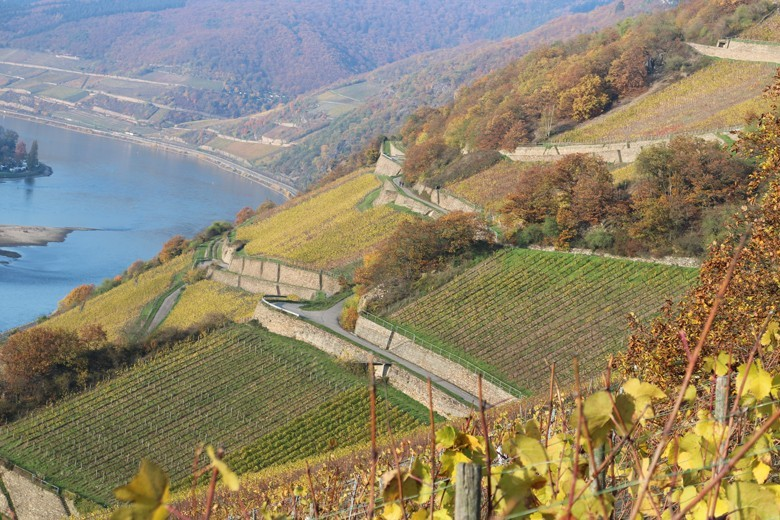 Die Lage Höllenberg über dem Rhein mit Besitz der Hessischen Staatsdomäne Assmannshausen