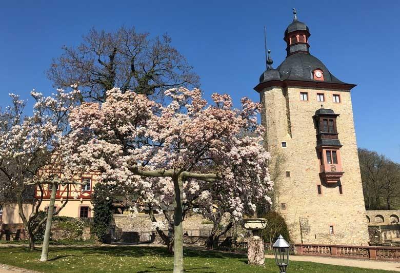 Schloss Vollrads im Rheingau - Weingut und Kultur - im Blick der Wohnturm