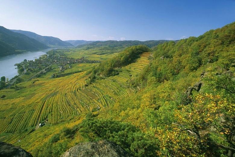 - Ried Achleiten im Weinbaugebiet Wachau in Niederösterreich.
