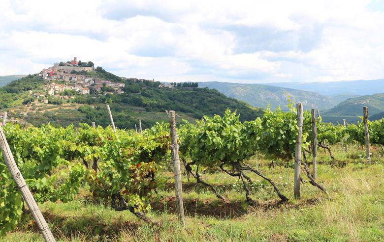 Weinbau in Istrien, Blick auf Motovun