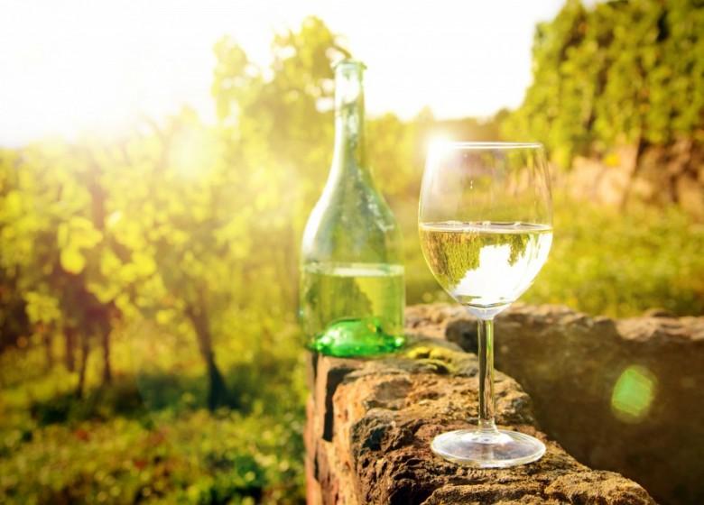 Weißwein und weiße Reben auf dem Vormarsch - im Anbau legen vorneweg weiße Burgundersorten zu, Riesling bleibt Nr. 1