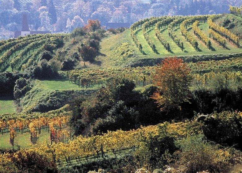 Weingärten im Weinbaugebiet Traisental in Niederösterreich. (Foto: ÖWM/Himml)