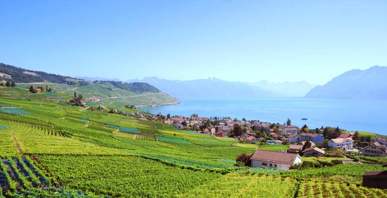 Das Weinbaugebiet Lavaux am Genfer See. Im Bild der Flecken Grandvaux, der heute zur Gemeinde Bourg-en-Lavaux gehört. Foto: OTV / L. Ryser
