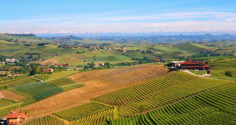 Typische liebliche Landschaft im Barolo mit Blick auf die um 165 km entfernten Alpen. Links hinter dem Wald der Mont Blanc auf der rechten Seite die hohen Gipfel des Monte Rosa Massivs. Foto: bonvinitas