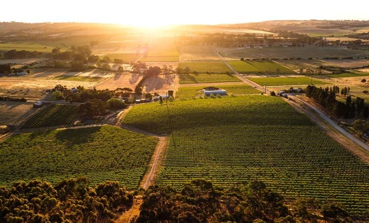 Byrne Vineyard: Reben im Clare Valley in South Australia