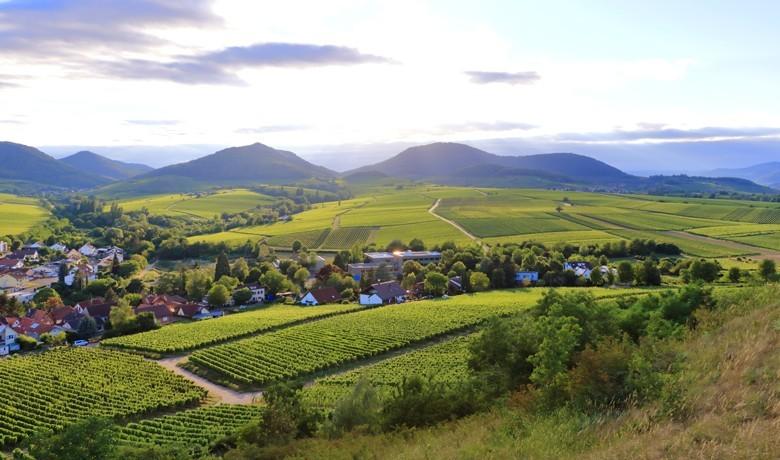 Die deutschen Weinbau-Betriebe werden größer, Durchschnitt auf 6,6 ha gewachsen – knapp 10% ökologisch. Im Bild: Blick von der Kalmit über Ilbesheim auf den Pfälzer Wald. Foto: Dynamoland - stock.adobe.com