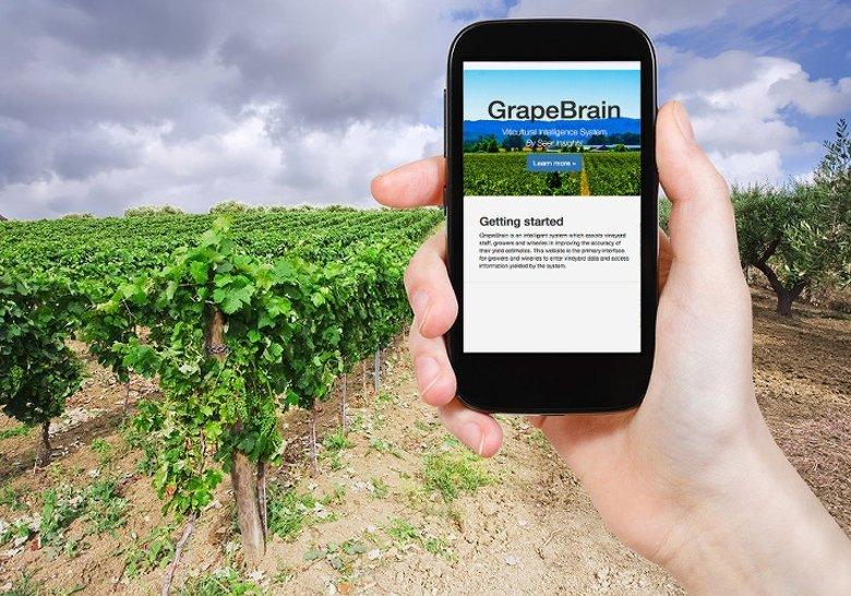 Die App GrapeBrain soll genauere Schätzungen von Ernte-Erträgen liefern.