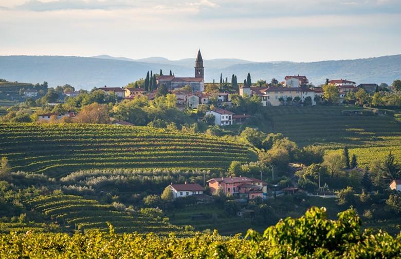 Die sanfte, hügelige Weinregion Brda in Slovenien, im Bild Biljana