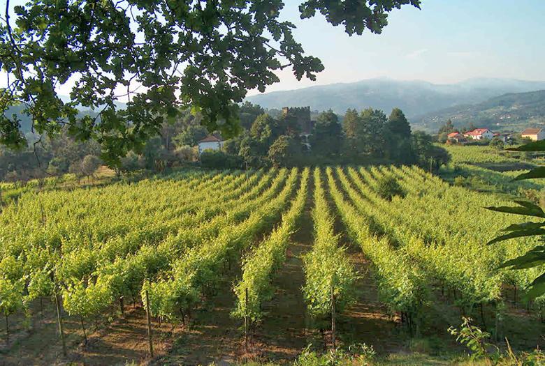 Typische Landschaft im Vinho Verde – hier die Quinta da Aguia. Foto: CVRVV