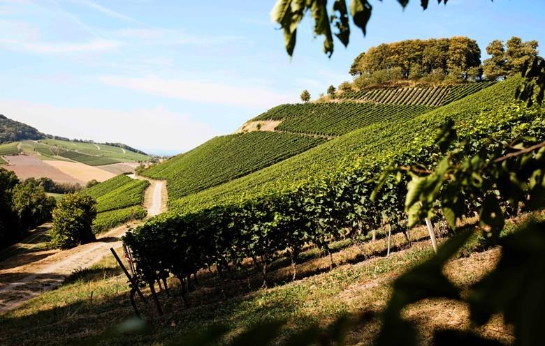 """Der vom VDP als """"Große Lage"""" klassifizierte Schlossberg am Ostrand des Steigerwalds hinter dem der Ort Castell liegt"""